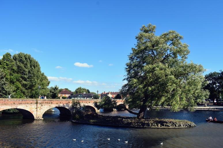 River tree (2)